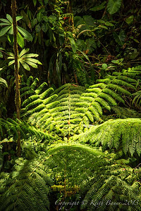 Lush ferns and vegetation in Monte Verde