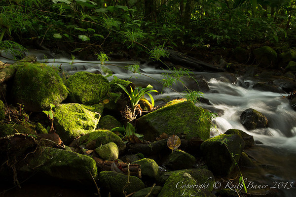 Playing with Light on a small tropical stream